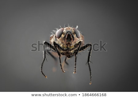 flying house fly in extreme close up Stock photo © gewoldi