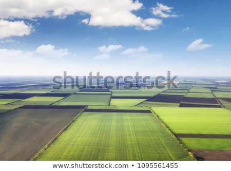 agriculture background stock photo © microolga
