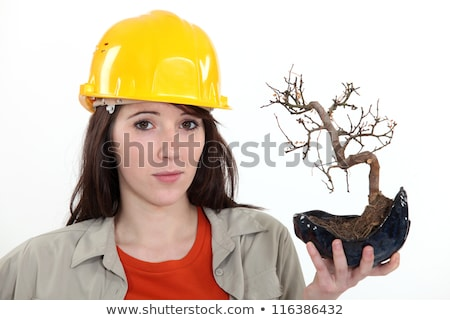 Uncertain tradeswoman holding up a bonsai plant Stock photo © photography33