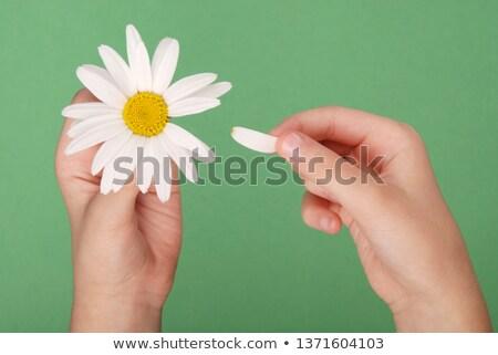 Tearing the petals Stock photo © zastavkin