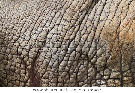 Rhino skin Stock photo © pinkblue