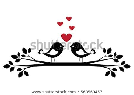 クローズアップ · 表示 · 美しい · 鳥 · 眼 · 自然 - ストックフォト © samsem