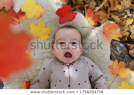 family lies on maple leaves Stock photo © Paha_L