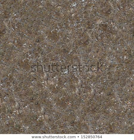 seamless texture of prairie soils stock photo © tashatuvango