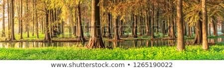 Secoya forestales panorámica vista parque California Foto stock © weltreisendertj