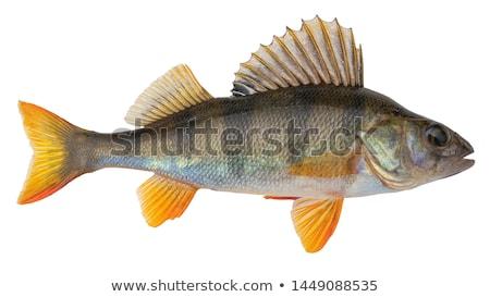 Küçük gökyüzü su balık yaz yeşil Stok fotoğraf © artlens