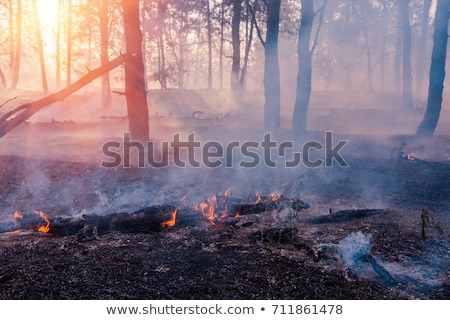 Forest Fire Smoke Close Stock photo © searagen