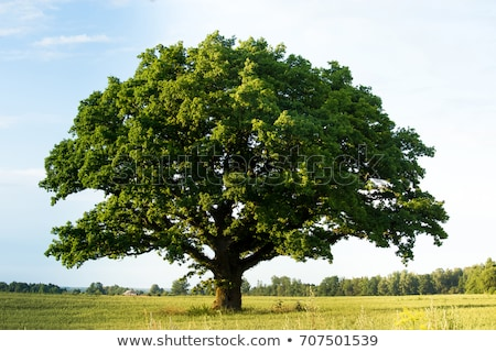 Grande árvore campo rural céu Foto stock © morrbyte