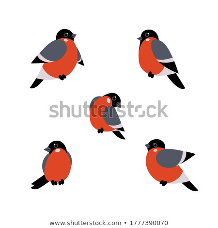 bullfinch Stock photo © bazilfoto