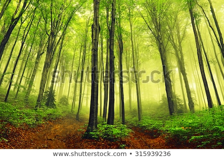 Green ground in a bright forest Stock photo © olandsfokus