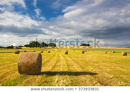 Foto stock: Cosecha · tiempo · verano · paisaje · tormenta · pesado