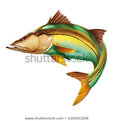 色 実例 魚 自然 芸術 水中 ストックフォト © Morphart