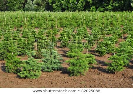 Campos jovem floresta cenário agrícola paisagem Foto stock © hraska