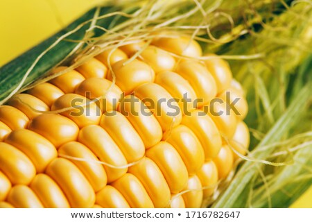 Corn maize harvest.  Macro photo Stock photo © Kirill_M