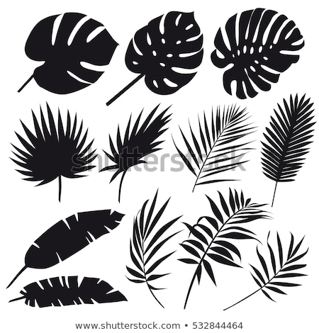 Stock photo: Vector set of black silhouettes of leaves on white background.