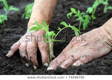 Vrouwelijke landbouwer bodem duurzaam middelen organisch Stockfoto © stevanovicigor