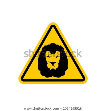 oroszlán · izolált · fehér · állat - stock fotó © popaukropa