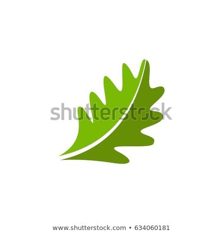 Deux chêne isolé blanche texture fond Photo stock © haraldmuc