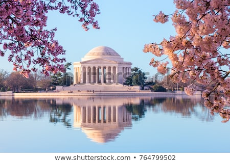 cherry blossoms jefferson memorial washington dc stock photo © qingwa