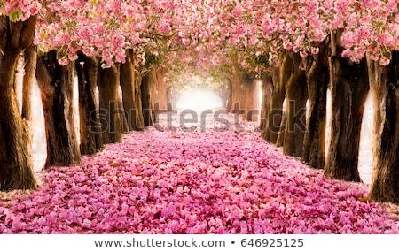 florescimento · árvore · flor · aves · branco · ensolarado - foto stock © Elensha