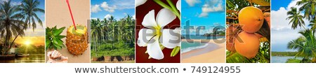 panoramic view of tropical beaches palm trees and fruits wide stock photo © alinamd
