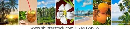 Panorámica vista tropicales playas palmeras frutas Foto stock © alinamd