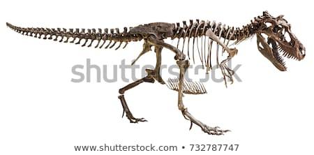 Dinozaur odizolowany starożytnych zwierząt potwora bestia Zdjęcia stock © MaryValery