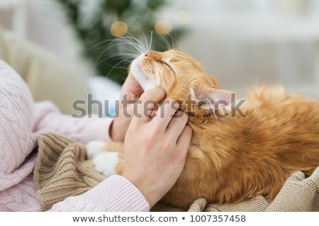 Foto stock: Close Up Of Owner With Red And Tabby Cat In Bed