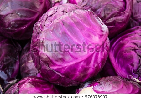 Purple Cabbage in Garden Stock photo © 2tun