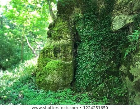 Hermosa verde paisaje España perdido lugar Foto stock © Imaagio