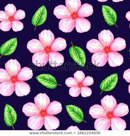 Pembe ebegümeci sakura örnek çiçek Stok fotoğraf © colematt