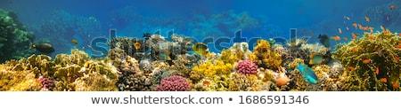 Kızıl deniz mercan İsrail palmiye ağaçları dağ görmek Stok fotoğraf © dariazu
