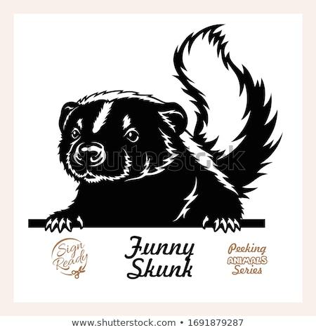 Skunks charakter ramki ilustracja kwiat projektu Zdjęcia stock © bluering