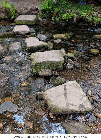 Pequeño piedra pasos forestales manana sol Foto stock © Juhku