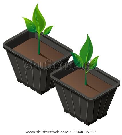 Mudas plástico copo crescimento vetor Foto stock © orensila