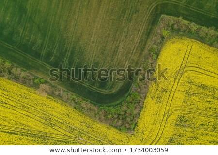 Canola Wheat abstract aerial Stock photo © lovleah