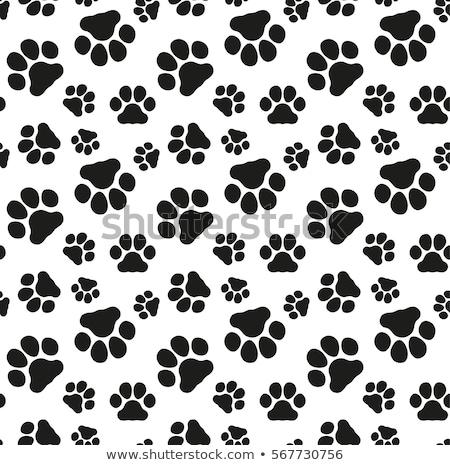 set of domestic pets isolated on white backdrop stock photo © robuart