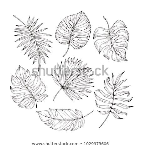 Ensemble tropicales laisse croquis style vecteur Photo stock © Margolana