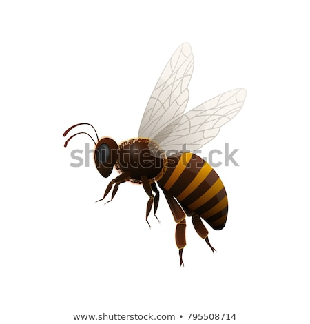 striped bee flying insect animal side view vector stock photo © pikepicture
