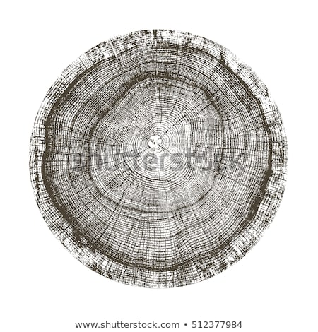 Round Wooden Cross Section With Tree Rings Vector Vector