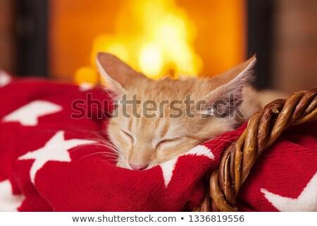 Laranja gatinho adormecido vermelho cobertor lareira Foto stock © ilona75