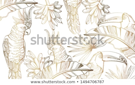 Parrot golden card Vector line art. Exotic palm leaves decors Stock photo © frimufilms