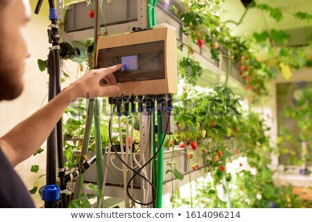 Young greenhouse worker choosing optimal temperature for strawberry bushes Stock photo © pressmaster