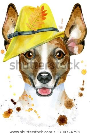 Acquerello ritratto jack russell terrier giallo Hat cute Foto d'archivio © Natalia_1947