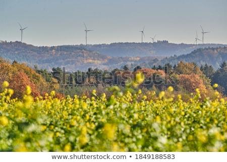 風力タービン 後ろ 開花 フィールド 自然 油 ストックフォト © elxeneize