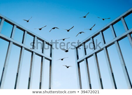birds fly over the open gate Stock photo © Ansonstock