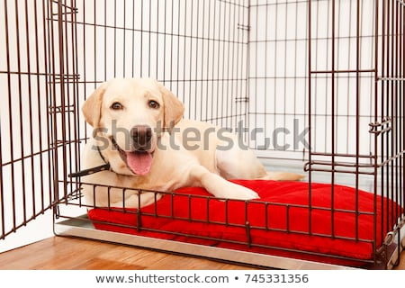 lang · teckel · hond · cartoon · illustratie - stockfoto © lenm