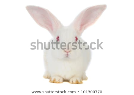 kafa · beyaz · tavşan · yalıtılmış · bebek · güzellik - stok fotoğraf © feedough