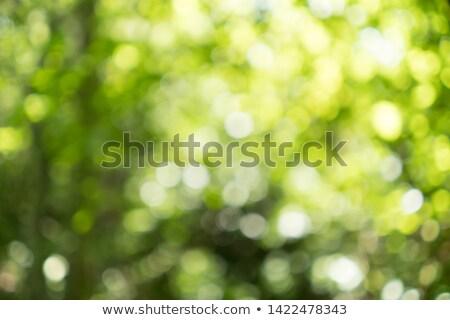 Absztrakt zöld fa virágok út virág tavasz Stock fotó © WaD