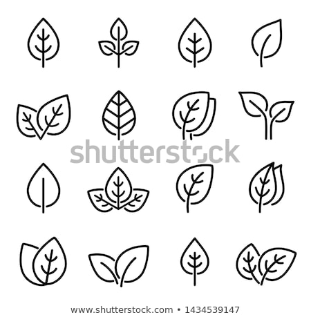 Friss zöld levelek ikon gyűjtemény izolált fehér levél Stock fotó © WaD